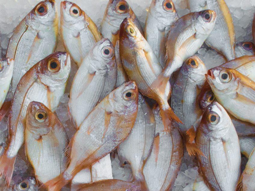 fish-farming-inside
