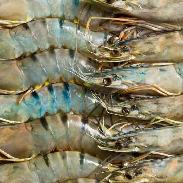 aquaculture-008