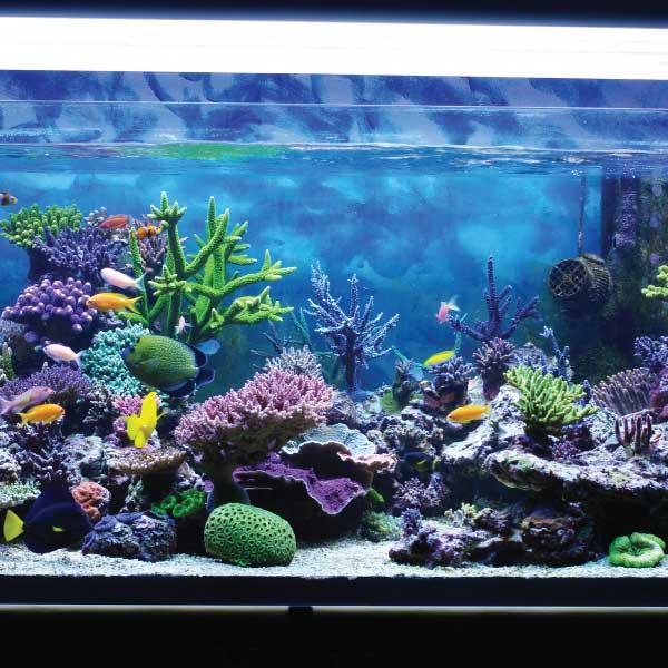 aquarium-002