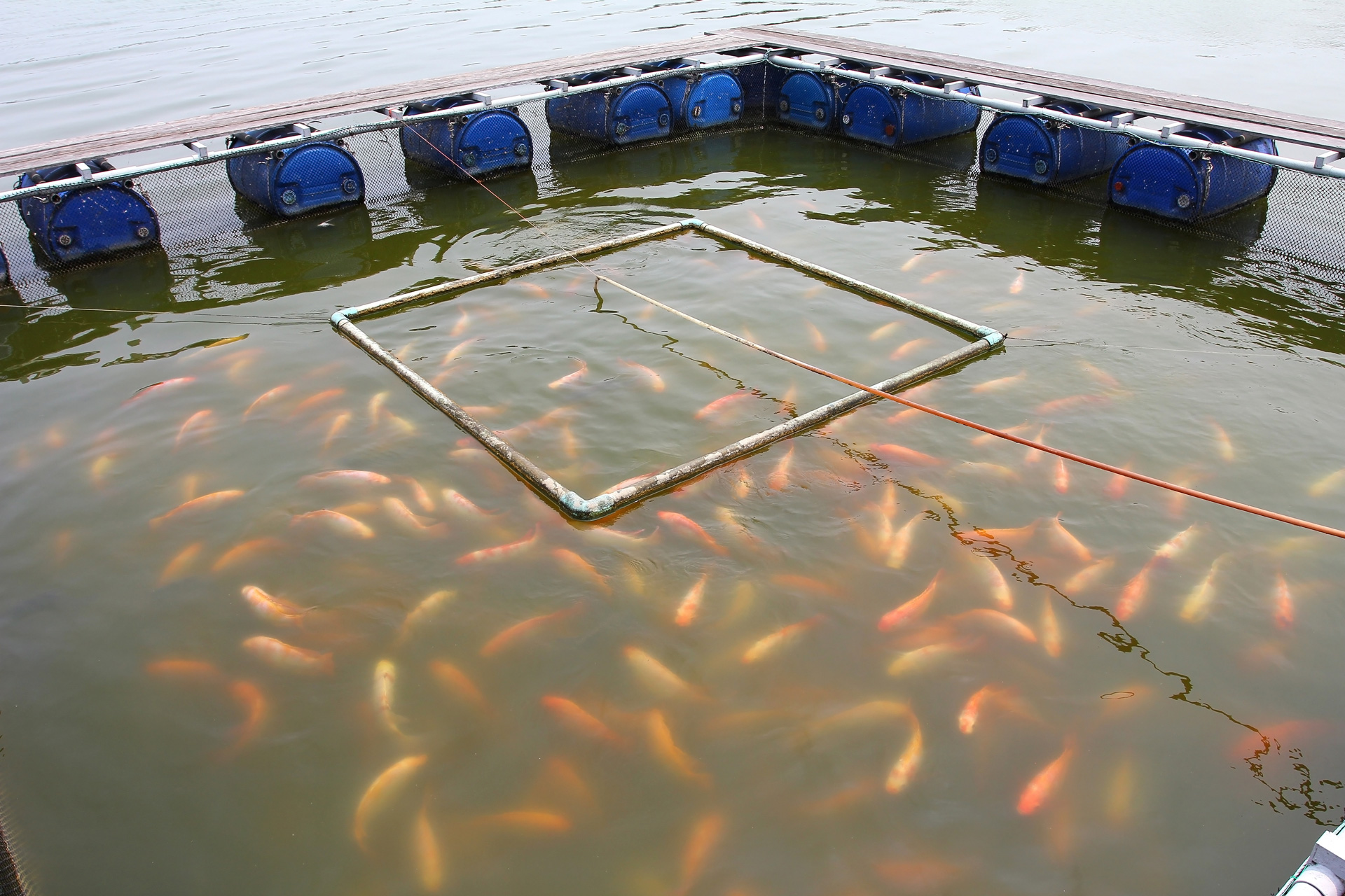 The Role Of Aquaculture In Transforming Nepal - Organica Biotech